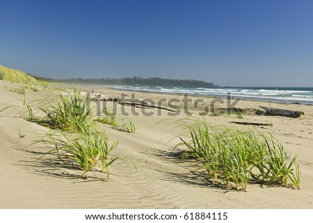 Sand dunes on Long Beach in Pacific Rim National park, Canada - stock photo