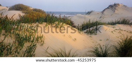 Sand dunes on Padre Island National Seashore, along the Gulf Coast of Texas. - stock photo