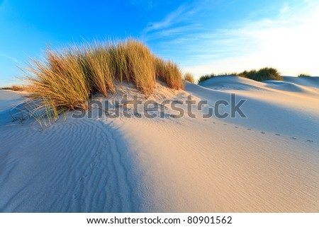 Sand dunes with helmet grass at sunset - stock photo