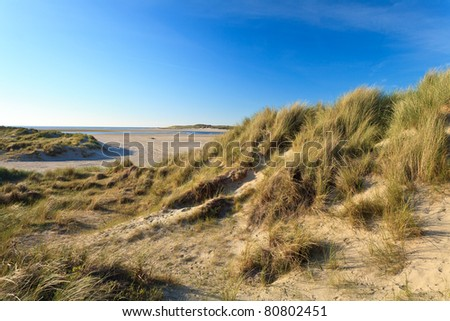 Sand dunes with helmet grass near the sea - stock photo