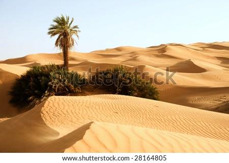 Sand dunes with one palm tree; Awbari, Libya - stock photo