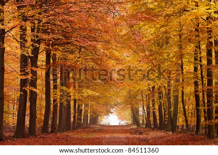 Sand lane with trees on a sunny day in autumn - stock photo