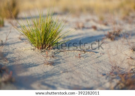 Sand of the dune, The Curonian Spit, Lithuania - stock photo