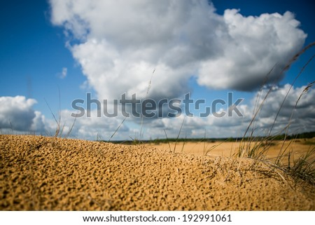 Sand Plants with blue sky and clouds - stock photo