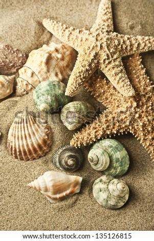 sand starfish - stock photo