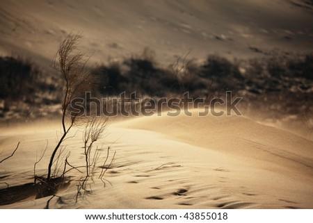 Sand storm in desert - stock photo