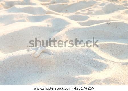 Sand Texture with starfish - stock photo