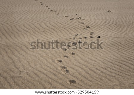 Sand  with  animal  footprints