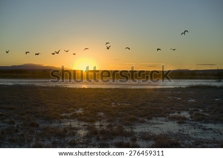 Sandhill cranes fly over the Bosque del Apache National Wildlife Refuge at sunrise, near San Antonio and Socorro, New Mexico  - stock photo