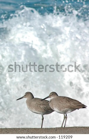 Sandpipers - stock photo