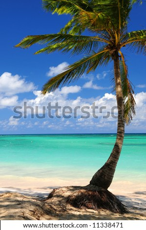 Sandy beach of a tropical island with palm tree - stock photo