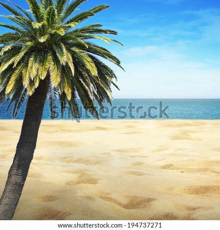 Sandy beach on sunny summer and palm tree - stock photo