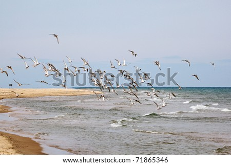 Sandy beach with a flock of flying Common tern
