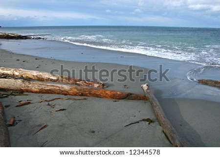 sandy beach with driftwood - stock photo