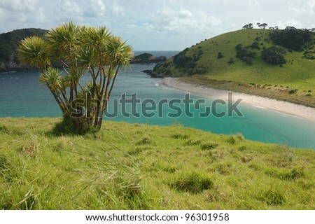 Sandy beach with palm tree at Bay of Islands - New Zealand - stock photo
