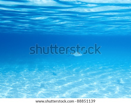 Sandy bottom, surface and fish in blue underwater