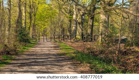 Sandy forest path through a forest of old beech trees on a sunny day at the beginning of spring. The trees are budding and the grass and nettles are bright green in color.