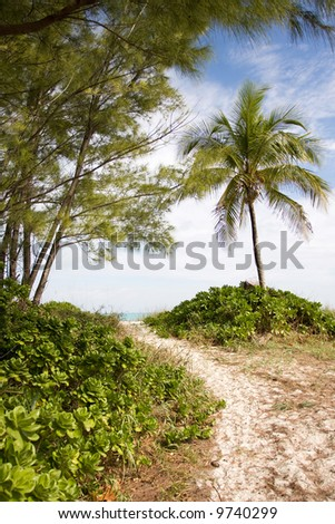 sandy path through palm trees to beach and sea