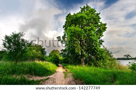 sandy road and trees alley. rural landscape
