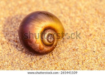 Sandy snail at sunset - stock photo