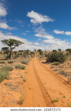 sandy trail with tire tracks in the red sand of the Kalahari desert, Kagalagadi Transfrontier Park, South Africa - stock photo