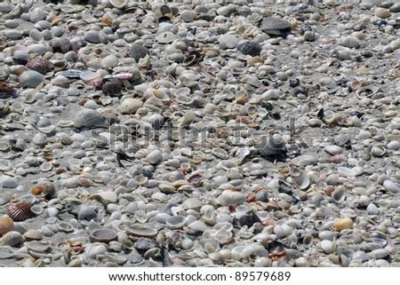 Sanibel Island Florida Shelling Beach - stock photo