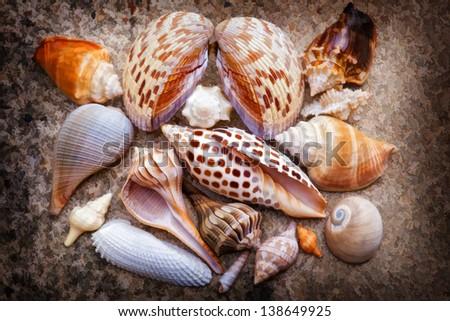 Sanibel Island Seashell Collection - stock photo