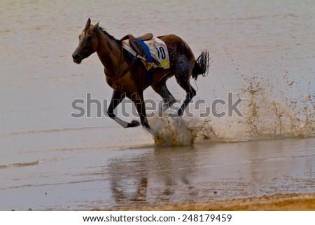 SANLUCAR DE BARRAMEDA, CADIZ, SPAIN - AUGUST 11: Accidentally a horse runs on horses races of the beach of Sanlucar de Barrameda on August 11, 2011 in Sanlucar de Barrameda, Cadiz, Spain. - stock photo