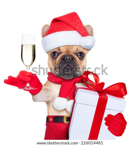 santa claus christmas dog toasting cheers with champagne glass , isolated on white background - stock photo