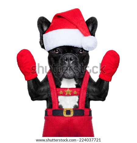 Santa claus christmas dog wearing a hat , isolated on white background - stock photo