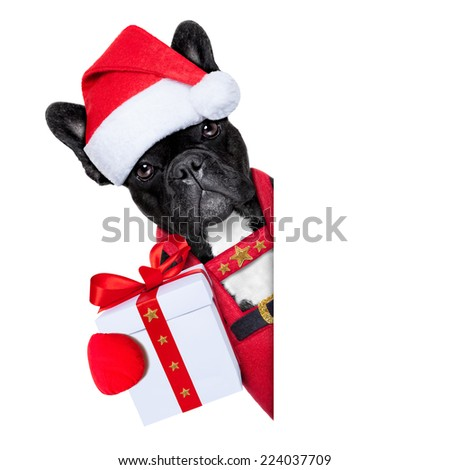 Santa claus christmas dog wearing a hat with a  xmas gift or present for you , besides a white or blank placard, isolated on white background - stock photo