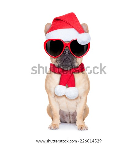 Dog Wearing Reading Glasses Bulldog Dog Wearing Read