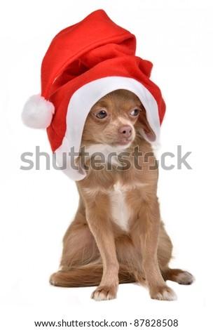 Santa Claus Dog - stock photo