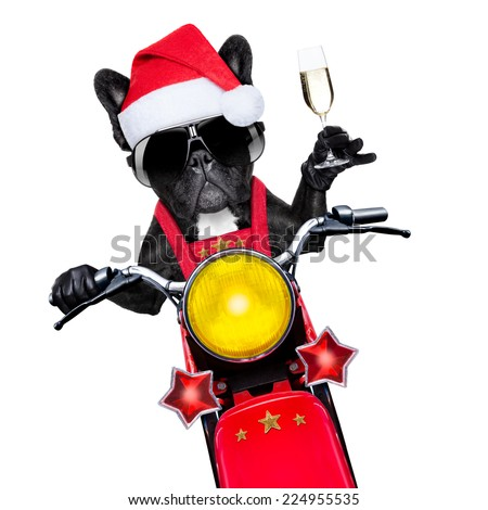 santa claus dog on motorbike toasting cheers to everyone, isolated on white blank white background - stock photo