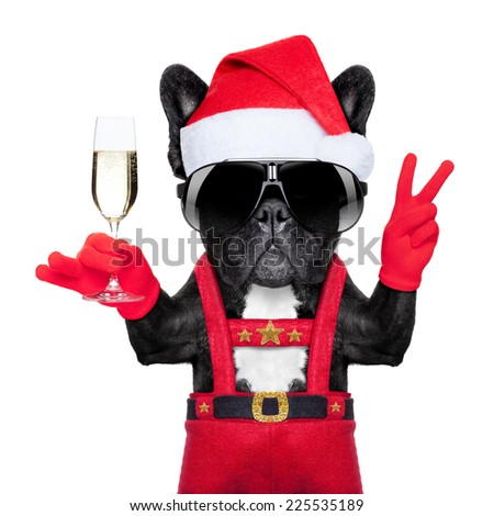 santa claus dog toasting cheers with champagne glass and victory or peace fingers, isolated on white background - stock photo