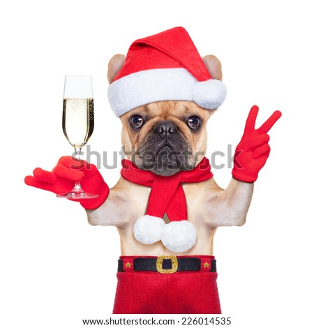 santa claus dog toasting cheers with champagne glass and victory or peace fingers, isolated on white background