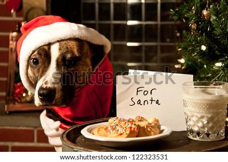 Santa Clause - stock photo