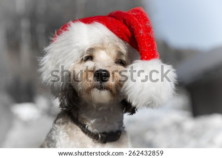 Santa Dog - stock photo