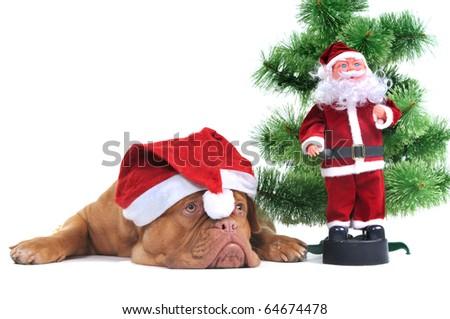 Santa Dog and Real Santa under a Christmas tree - stock photo