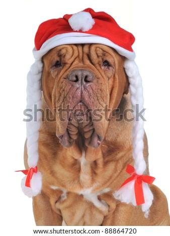 Santa Dog isolated - stock photo
