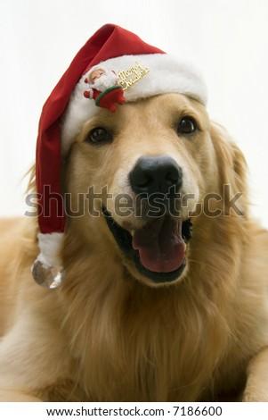 santa dog singing on christmas day - stock photo
