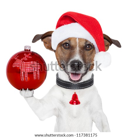 santa dog with  christmas ball on paw and a bell - stock photo