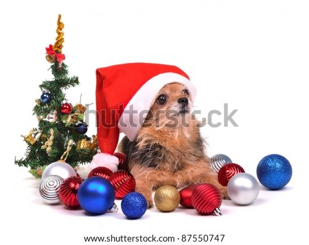 Santa dog with Christmas decorations, against white background - stock photo