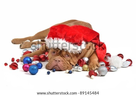 Santa dog with Christmas decorations, isolated - stock photo