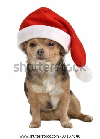 Santa dog with red hat, isolated