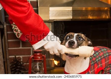 Santa Giving a Dog a Present - stock photo