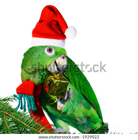 Santa parrot holding a golden gift package - stock photo