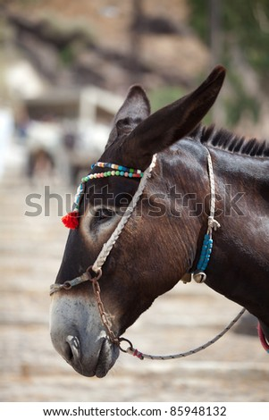 Santorini Donkey - symbol of the island. Santorini, Thira, Greece. - stock photo
