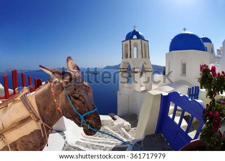 Santorini island with donkey in Oia village, Greece - stock photo