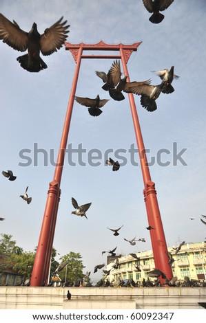Sao Chingcha Thailand Flying Pigeon - stock photo